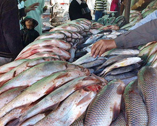 Fish production in pakistan